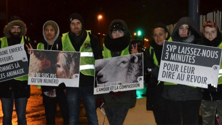 "Les activiste de ""Grenoble animal save"" ce lundi 11 février 2019 devant l'abattoir de Grenoble au Fontanil-Cornillon. / © Grenoble Save Animal"