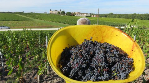 vendanges en rouges