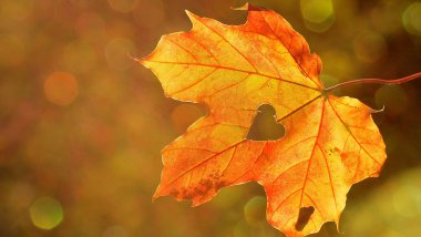 Feuille d'automne / © Licence CC by Pixabay