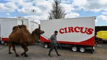 chameau cirque Circus confinement à Perrecy-les-Forges - AFP
