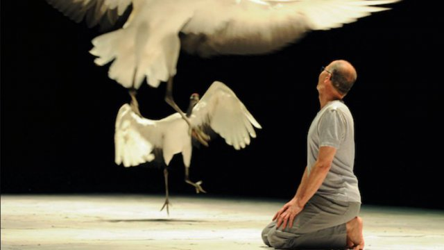"Le spectacle ""Light Bird"", chorégraphié par Luc Petton. / © compagnie Le Guetteur"