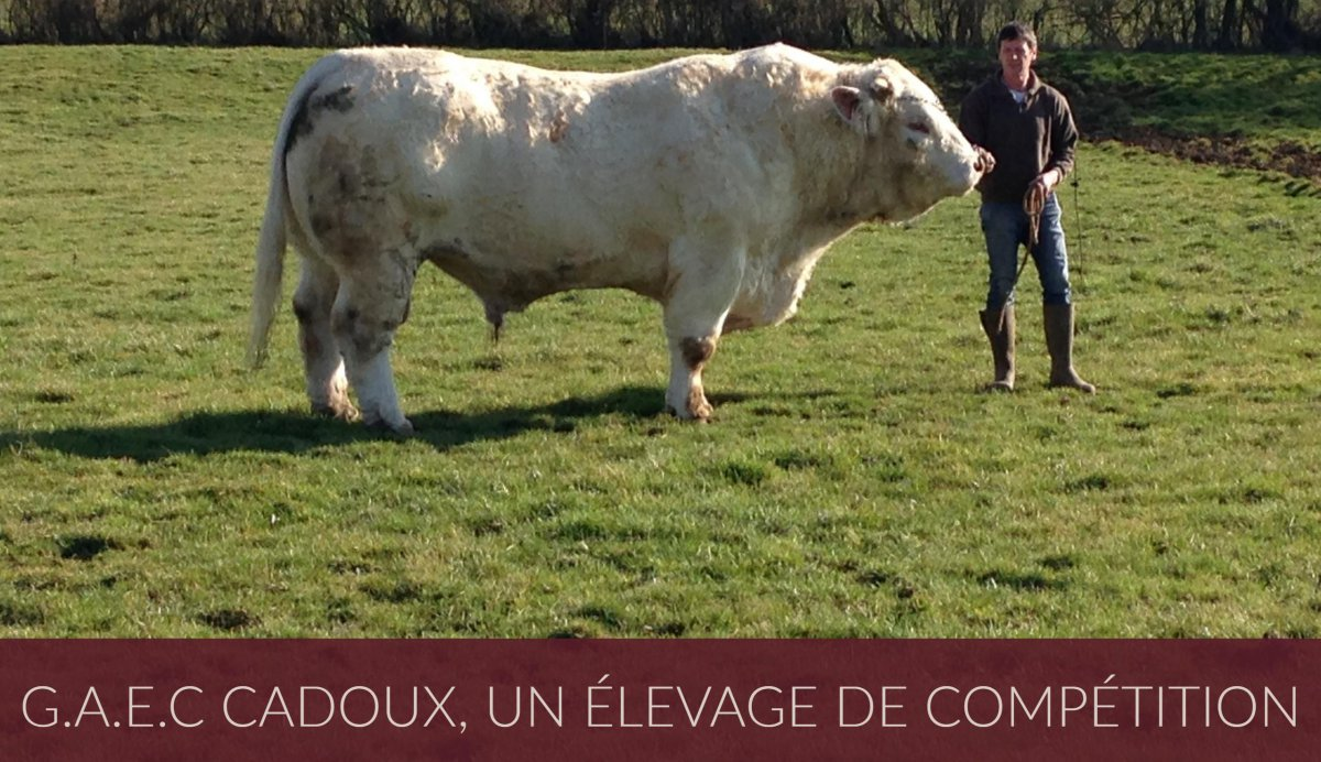 Claude Cadoux et son taureau Holiday participeront au Salon International de l'Agriculture de Paris 2017 / © Amélie Douay - Tiphaine Pfeiffer - France 3 Bourgogne