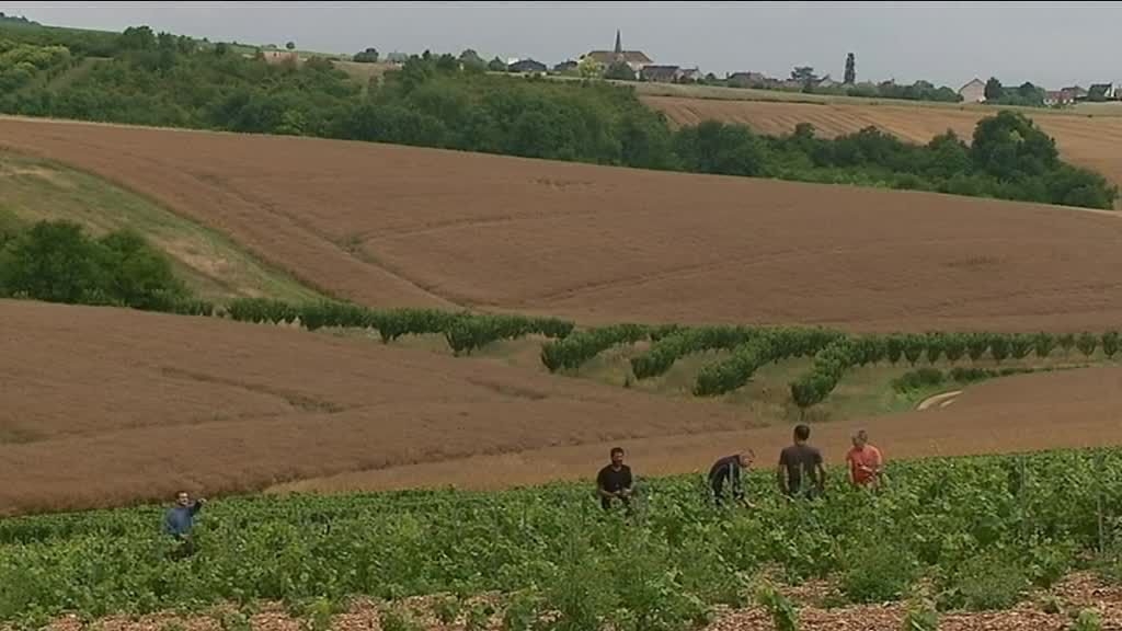 Agriculture yonne