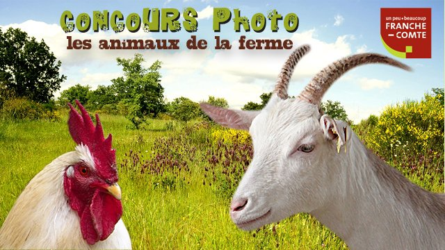 concours photo les animaux de la ferme france 3 franche comt. Black Bedroom Furniture Sets. Home Design Ideas