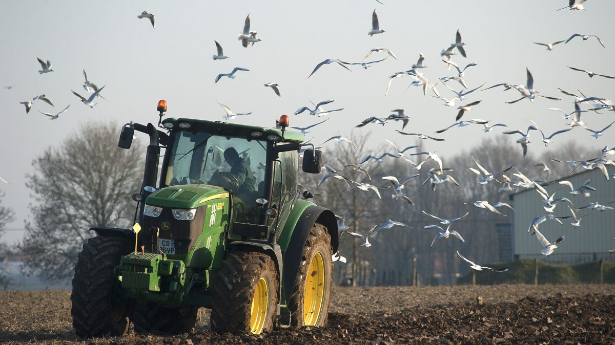 Un engin agricole entouré d'une nuée d'oiseaux - Photo d'illustration / © MAXPPP