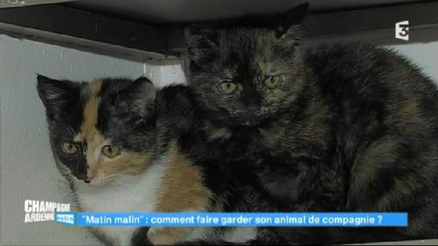 Champagne-Ardenne matin - Faire garder ses animaux de compagnie