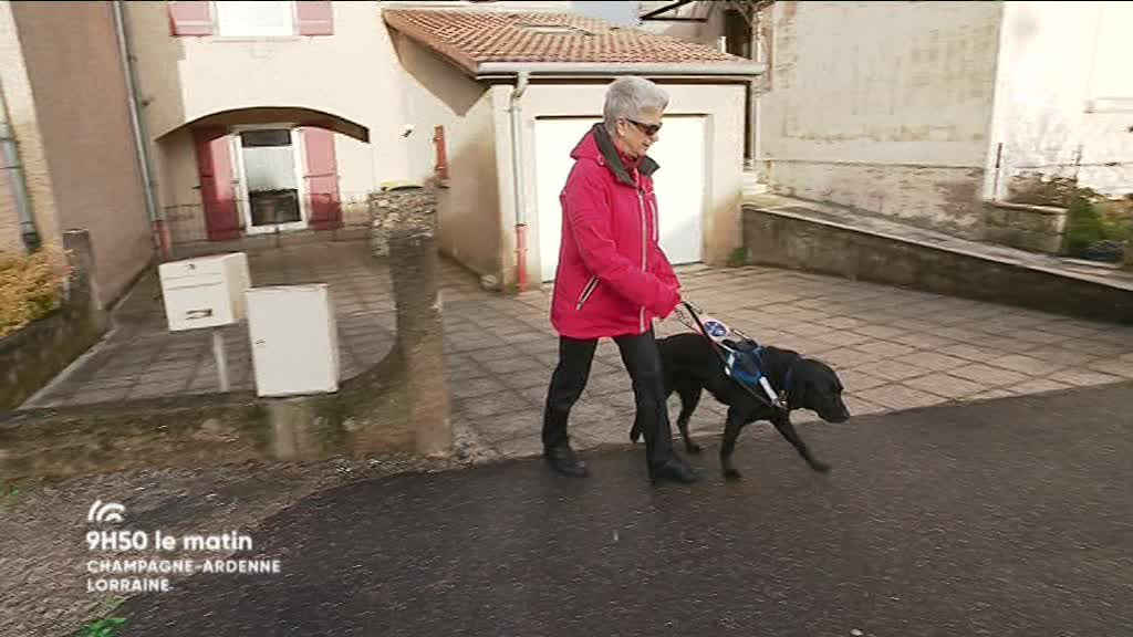 9H50 le matin Champagne-Ardenne Lorraine - Chiens Guides d'Aveugles