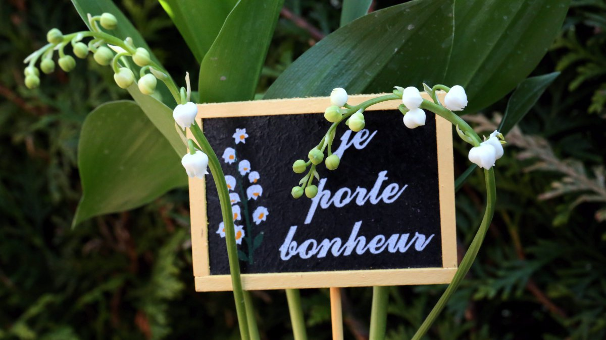 Comment Planter Du Muguet le muguet : attention, plante toxique - france 3 grand est