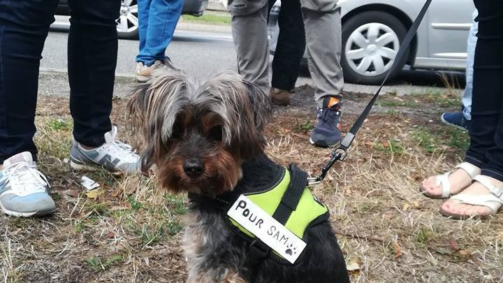 Mulhouse 150 People Pay Homage To Sam A Dog Beaten To Death