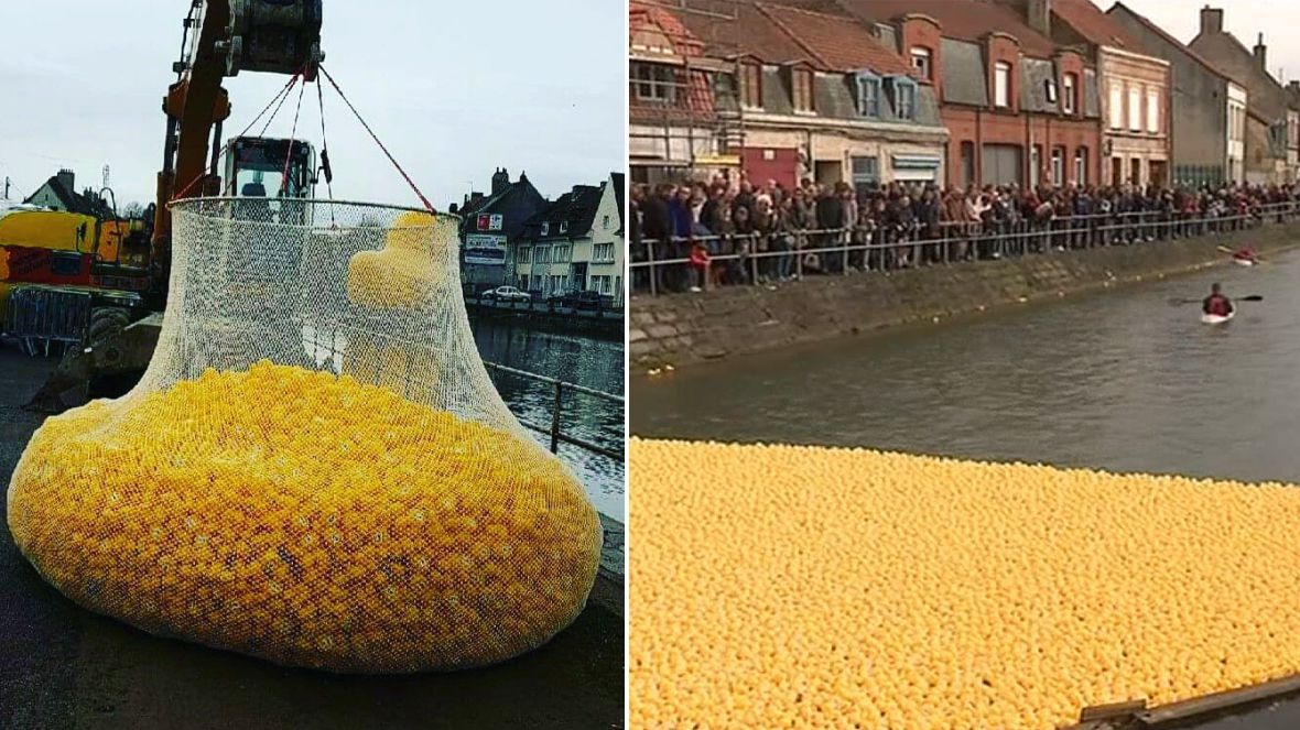 VIDEO. Saint-Omer : 12 000 canards en plastique font la course dans l'Aa