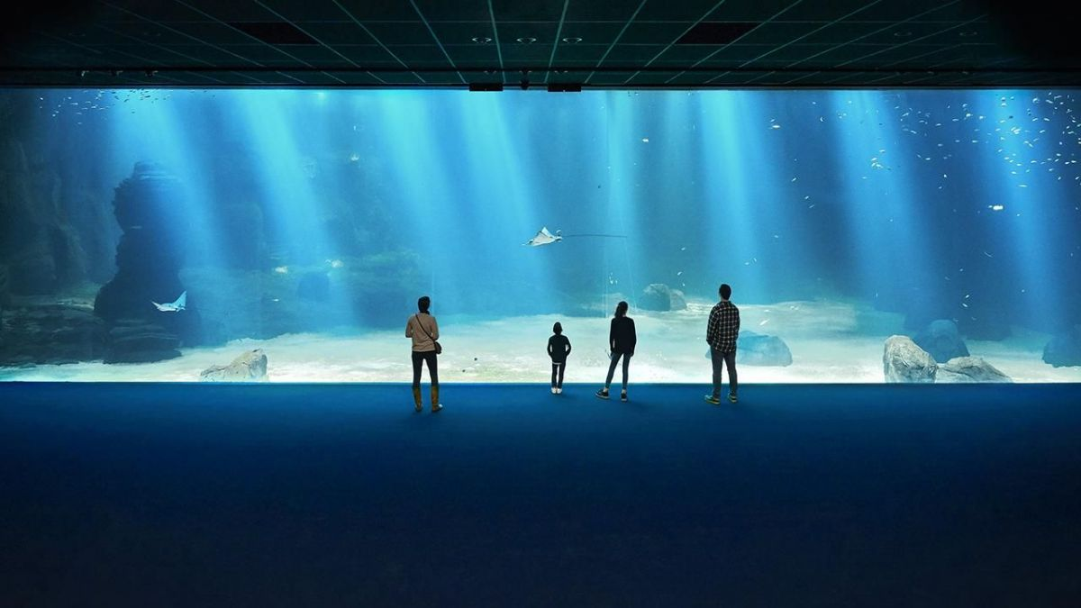 Nausicaá, le plus grand aquarium d'Europe