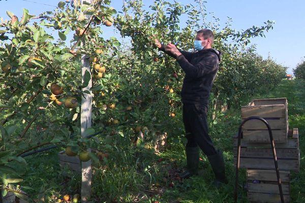 Des pommes sucrées et en grande quantité. 2020 s'affiche comme une excellente année dans l'Eure.