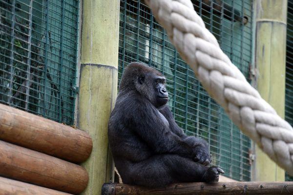 """Pass sanitaire obligatoire au 21 juillet : """"une décision brutale"""", selon le parc zoologique de Saint-Martin-la-Plaine  (image d'archives)"""