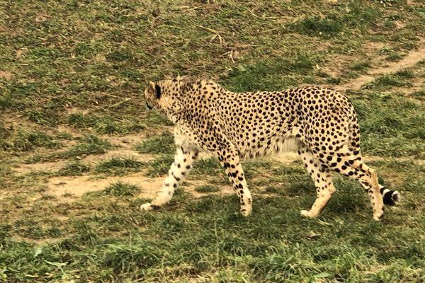Ce mois-ci, l'équipe d'Enquêtes de région se rend au bioparc de Doué-La-Fontaine où se trouvent 1400 animaux sur 17 hectares.
