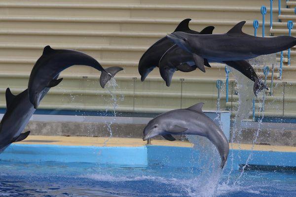 Les dauphins du Marineland d'Antibes (Alpes-Maritimes) : la nouvelle politique de TripAdvisor ne s'appliquera pas aux sanctuaires marins prodiguant des soins aux cétacés déjà en captivité.