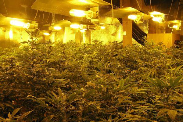 Archives 2011. Une ferme de cannabis a été découverte à La Courneuve, en région parisienne en 2011.