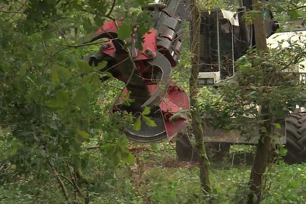 Une machine de grande taille est utilisée pour abattre les arbres du bois des Brûlins à Cléon.