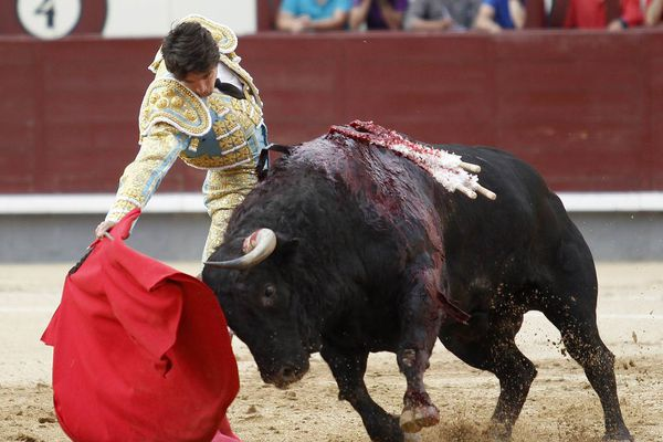 Madrid : la main droite de Castella et le galop de Hebrea