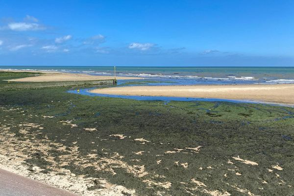 D'importante quantités d'algues jonchent la plage de Lion-sur-Mer en ce mois de juillet.