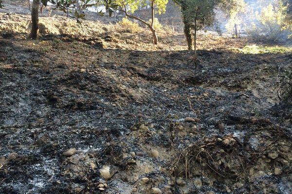 Un paysage lunaire après l'incendie à Castagniers