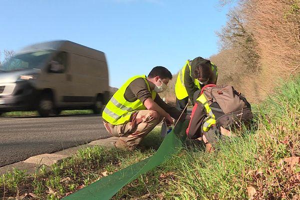 Pour éviter que les amphibiens ne soient écrasés par des voitures, un filet de plus d'1km de long a été installé le long de la route.