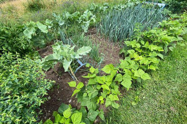 Les légumes poussent assez facilement dans le potager de Claudy.