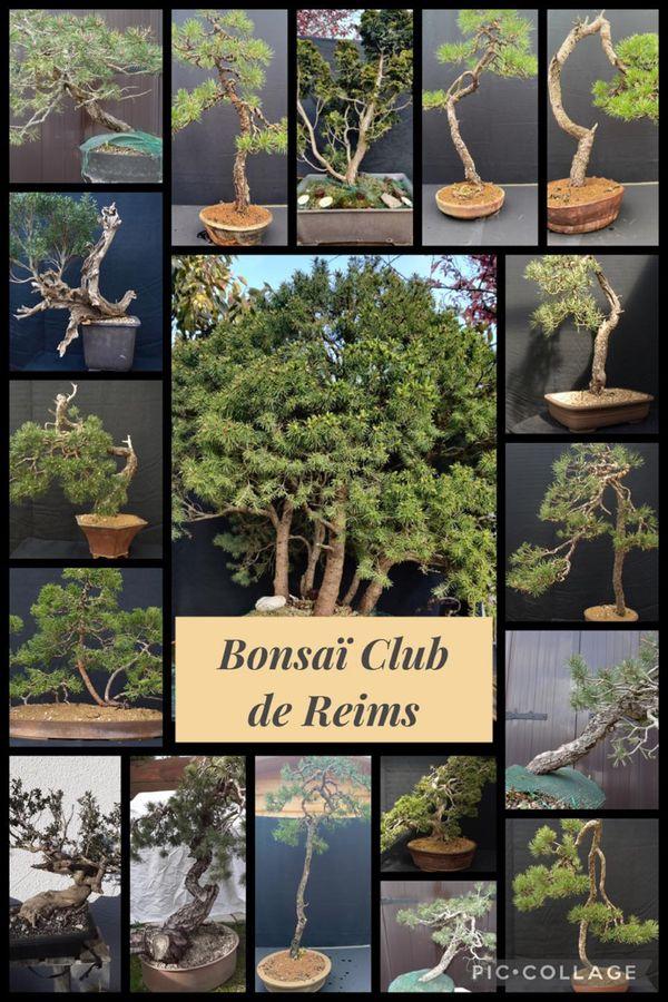 Les membres du bonsaï club de Reims apporteront leurs plus beaux bonsaï et accompagneront les visiteurs dans ce voyage initiatique.