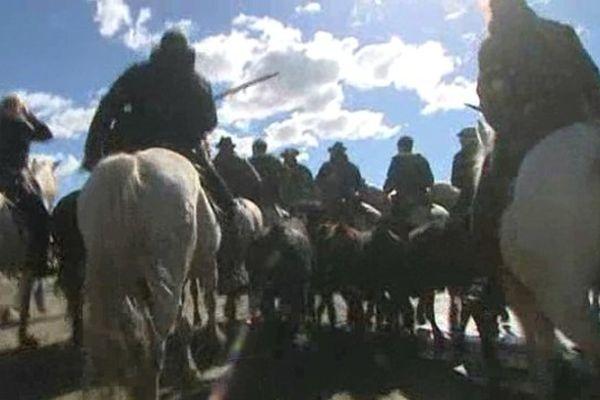 Les taureaux sont encadrés par de nonbreux cavaliers.