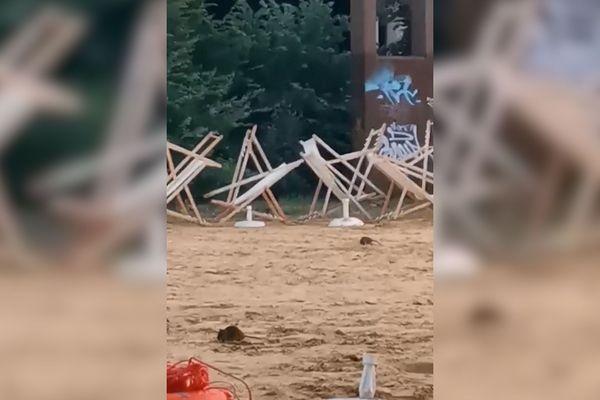 Des rats sur la plage de Rouen sur Mer, rive gauche
