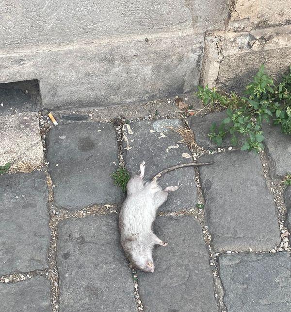 Cadavre gisant près du Vieux-Port.