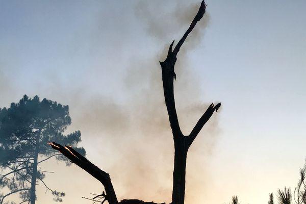 Près de 7 hectares de végétation ont brûlé en quelques heures