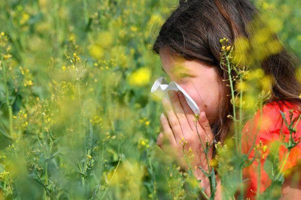 L'alerte aux pollens graminées est donnée plus tôt cette année. La météo clémente et les fortes températures de ces derniers jours ont favorisé la dissémination des  pollens.