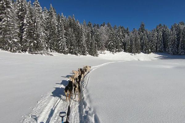 Le planning de baptêmes en traîneau à chiens affichait complet pour les vacances de fin d'année sur le plateau du Vercors. Faute de pouvoir faire du ski alpin, les activités nordiques connaissent une embellie dans la Drôme.