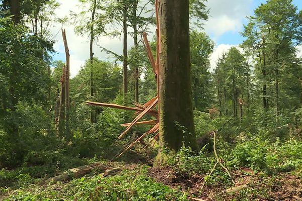 Les  effets violents de la tempête du 4 juin
