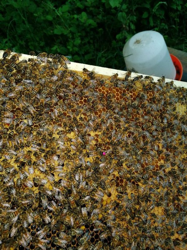 Il y a entre 30 000 et 50 000 abeilles dans une ruche, une mini société à protéger avec sa reine au centre
