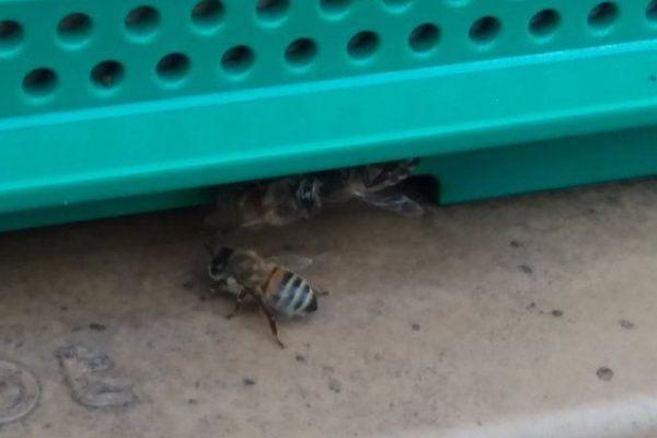 Une des 4 ruches des jardins de l'Elysée
