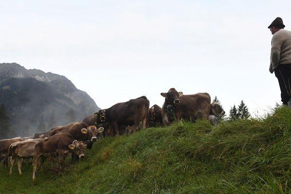 La transhumance voit des éleveurs, conduire du bétail à travers le pays à la recherche de pâturages saisonniers.