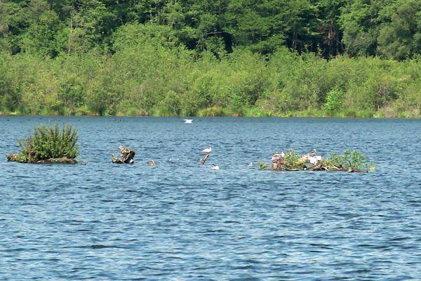 Plusieurs espèces d'oiseaux se sont reproduits sur le site préservé d'Heurteauville.