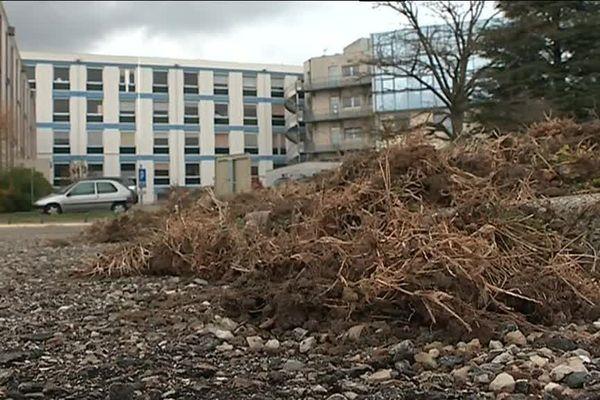 Les pelouses du Centre Hospitalier de Privas ravagées par les sangliers