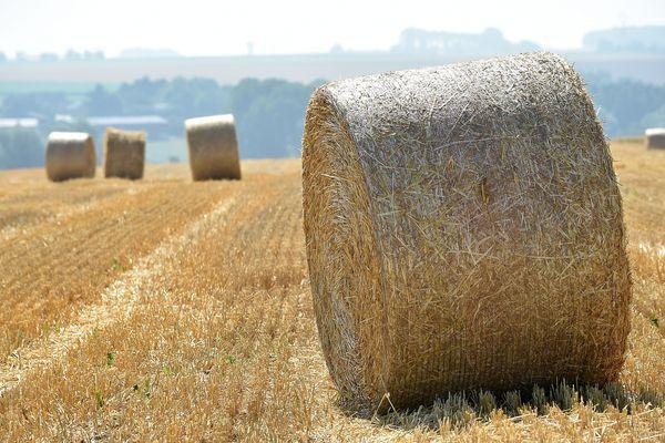 Une fois passé le front atténué de ce lundi, les terres agricoles de l'Eure connaîtront toute la semaine un temps calme, sec et de plus en plus chaud.