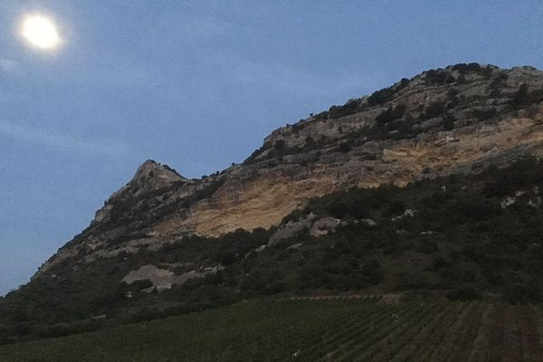 Les vendanges du vin bleu Imajyne se font de nuit, pour préserver la fraîcheur du vin.
