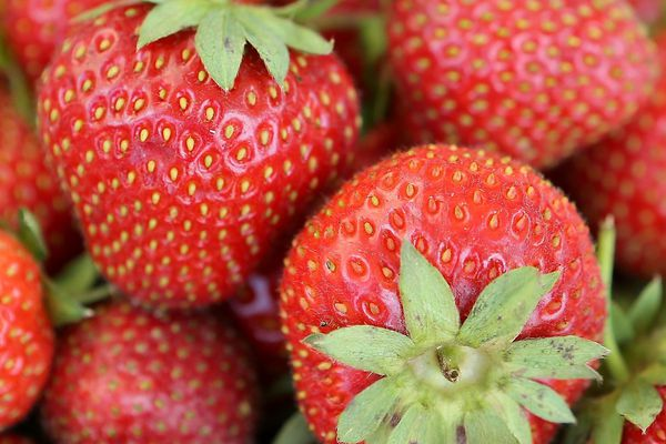 Illustration de fraises