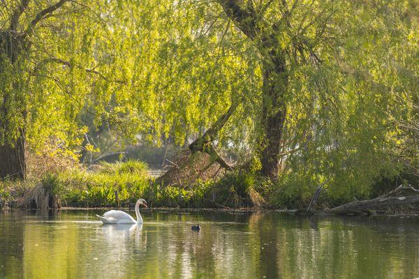 Festival de l'Oiseau et de la Nature -