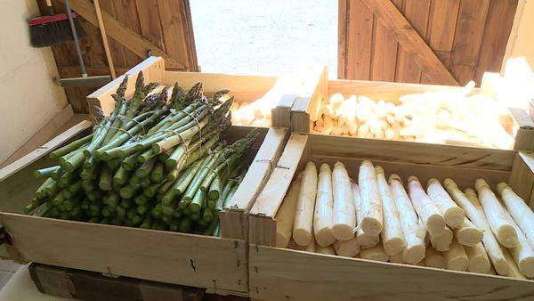 Vertes ou blanches, les asperges restent des mets délicats prisés des amateurs