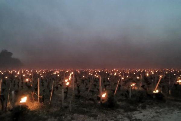 Des bougies ont été installées entre les vignes pour lutter contre le gel, à raison de 350 à 400 bougies par hectare. Ici, dans le secteur de Saint-Emilion en Gironde