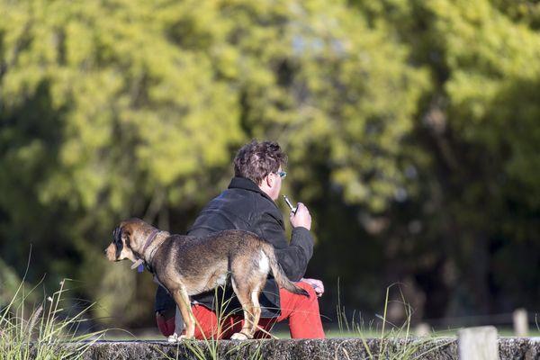 Les chiens sont-ils victimes d'actes de malveillance dans les parcs à Gap ? (Illustration)