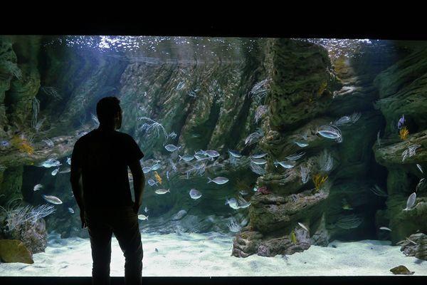 Les premiers visiteurs reviennent observer les poissons du biodiversarium de Banyuls-sur-mer.