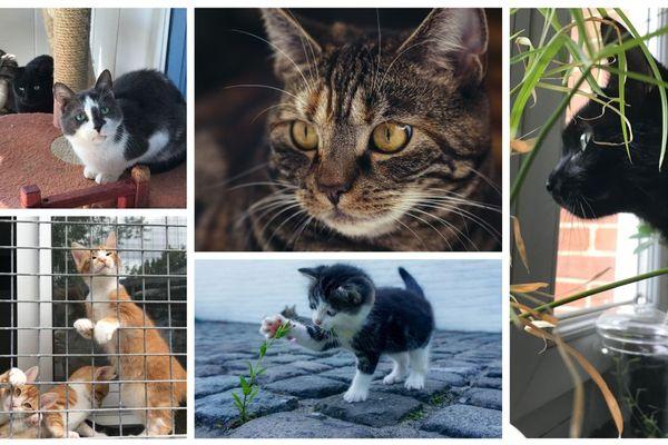 Les chats représentent plus de 62% des animaux abandonnés en Centre-Val de Loire