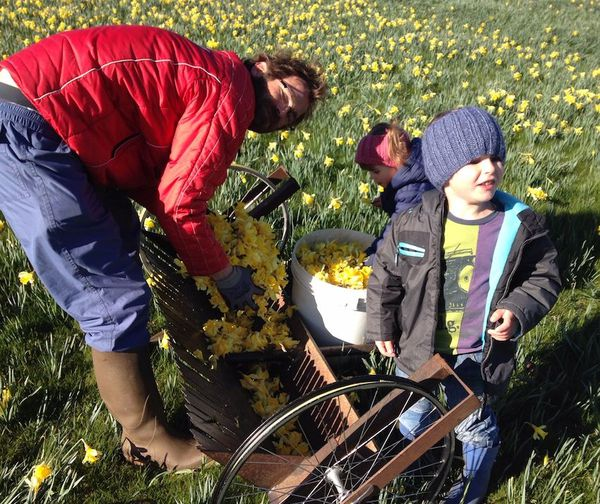 Stanislas utilise un peigne monté sur un chariot pour la cueillette