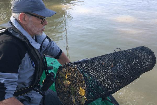 La police de la mer contrôle une nasse d'anguilles.